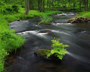 Stream Cascading Through Lush Forest